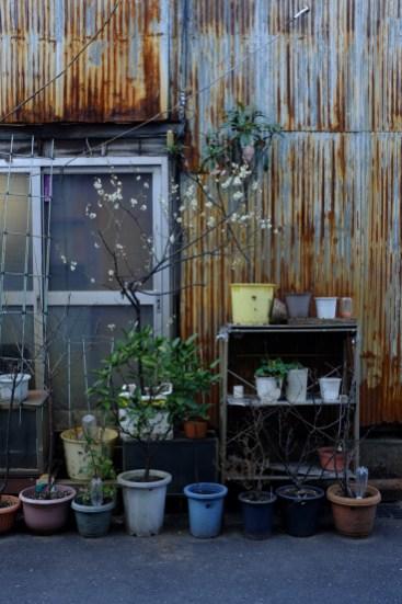 tokyo-photowalks-nethertokyo__DSF3899