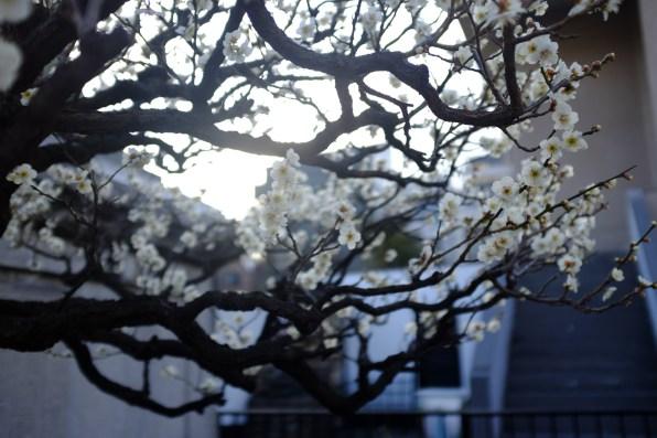tokyo-photowalks-nethertokyo__DSF3997