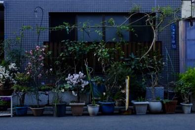 tokyo-photowalks-nethertokyo__DSF4004
