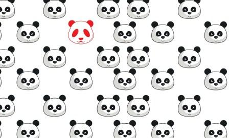 CHINA: Panda Albino