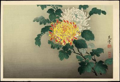 Koitsu_Tsuchiya-Chrysanthemum 1870-1949