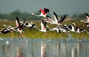 bird santuary