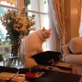 chat de l'hotêl Bristol