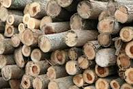 Available Wood Logs/Posts/Shores for $500JMD