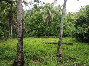 15 plus Acres Land, Fontabelle, St. Mary