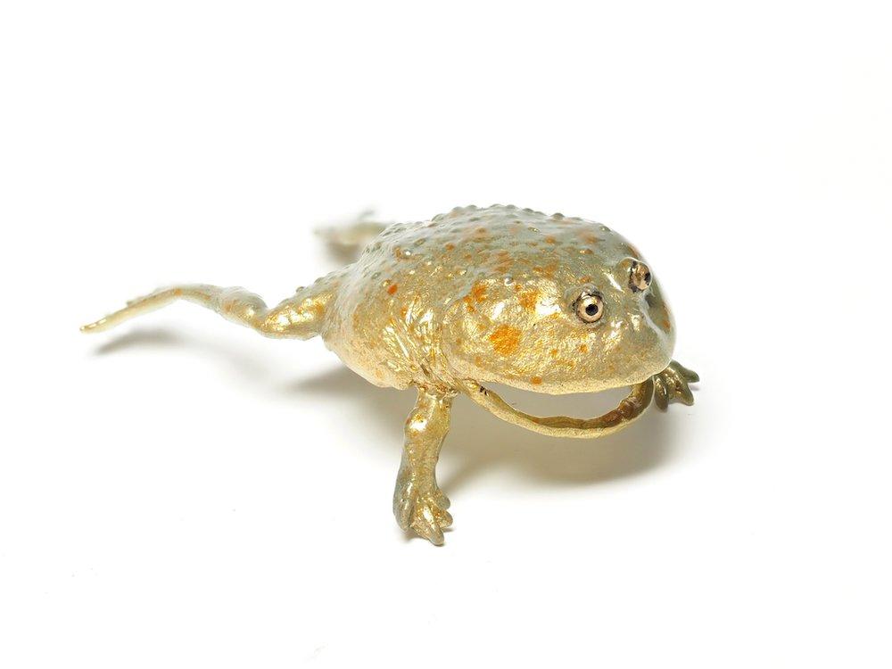 耳垂被咬一口…很鬧的「青蛙耳環」神奇熱賣 放大看眼神「超像活物」 - 日本風向球