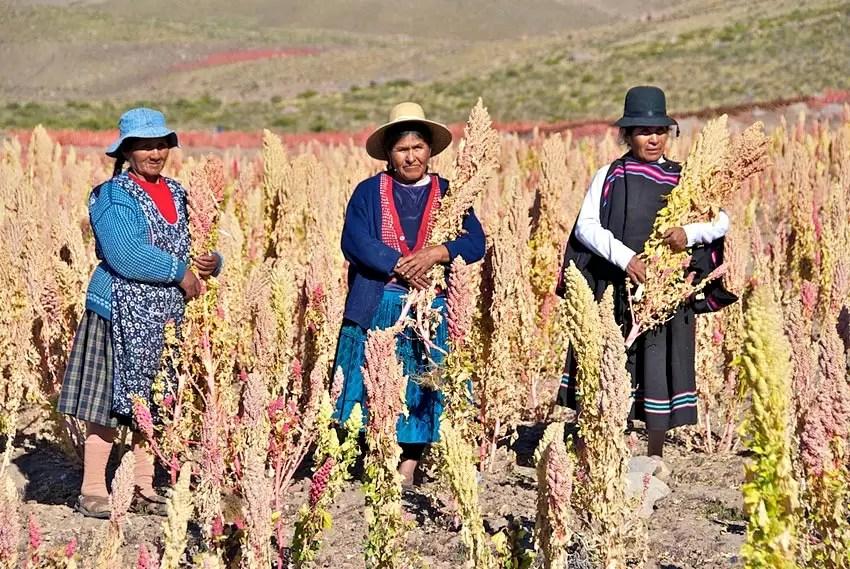 02-19-quinoa2