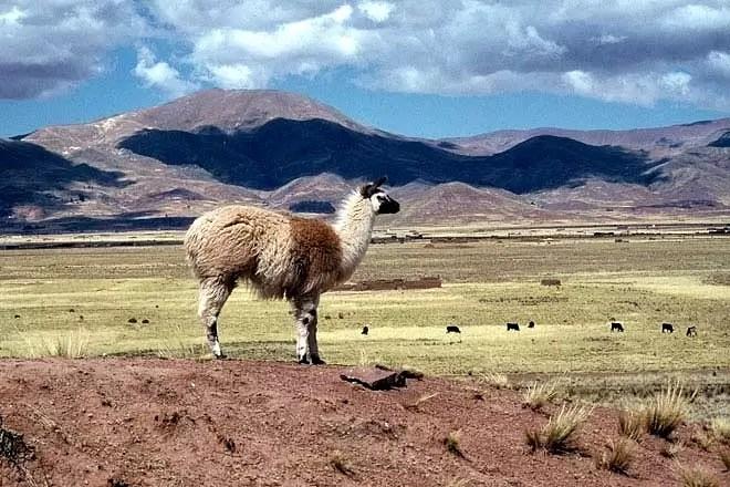 altiplano-bolivia-t660