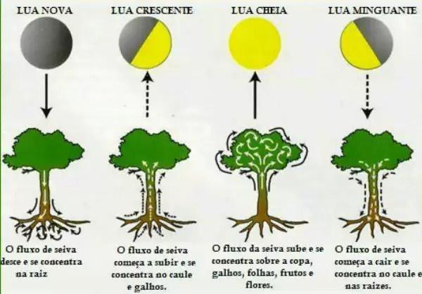 influência da lua na agricultura