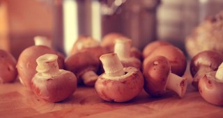 mushrooms-756406_1920