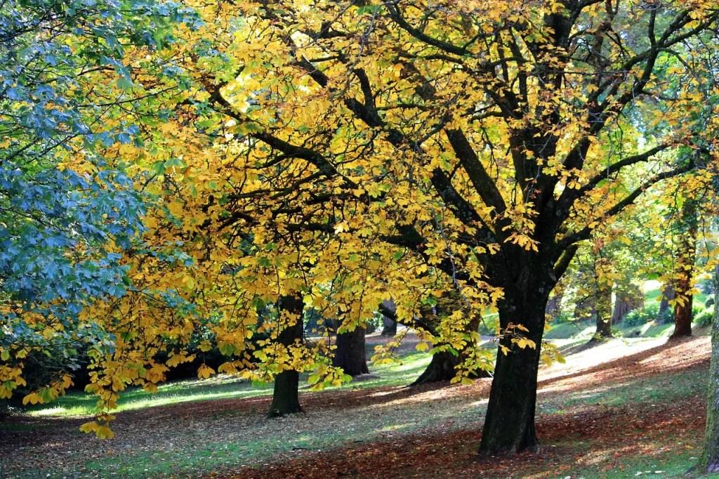 autumn-707614_1280