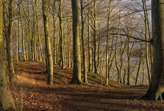 trees-1775490_640