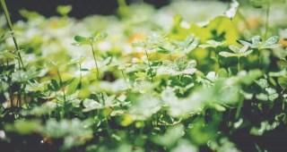 energia das plantas