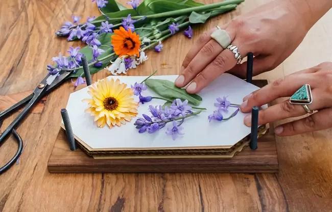 Desidratar flores