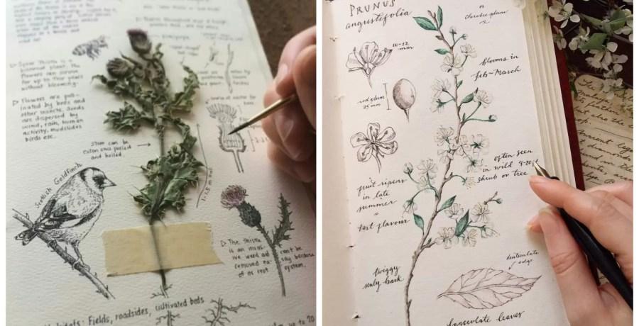 diário de plantas