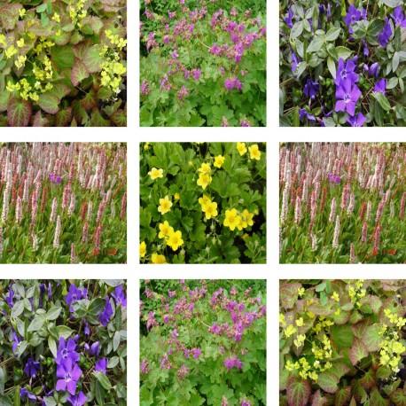 pack de plantes couvre sol endroits difficiles achat vente en ligne