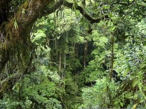 Epiphyte en fôret tropicale