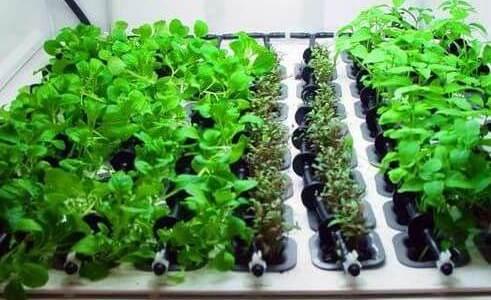 Réussir ses cultures d'intérieur avec l'hydroponie