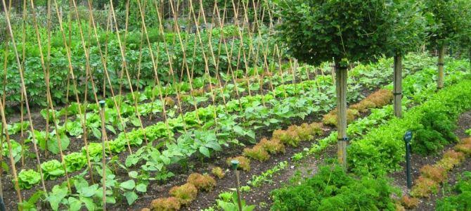 Combien de mètres carrés doit faire un potager pour nourrir une famille pendant un an