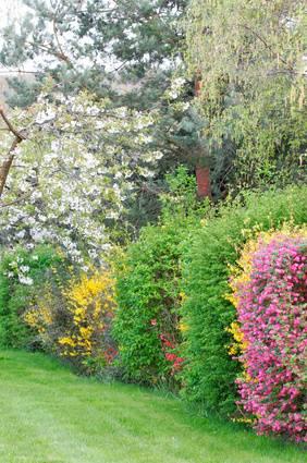 Les haies fleuries  Jardinagefmguide du jardinage