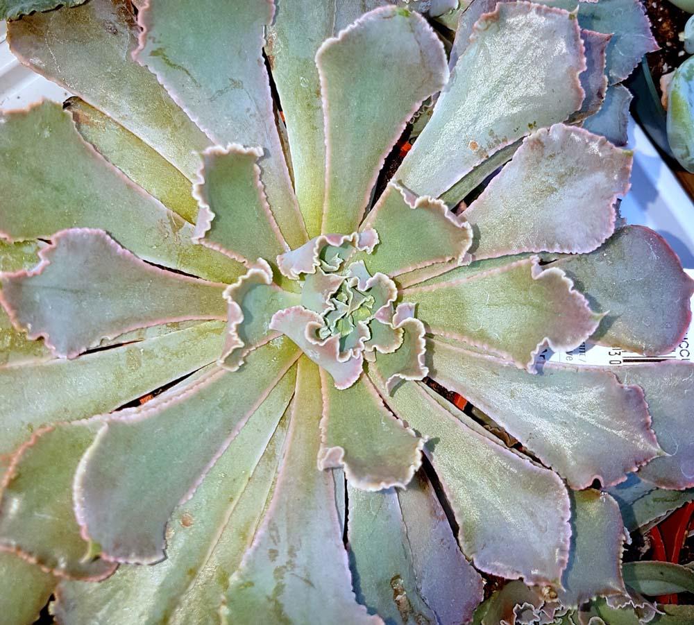 Plantes grasses succulentes  Jardin Dion