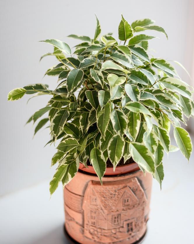 culture de vos plantes vertes et fleuries