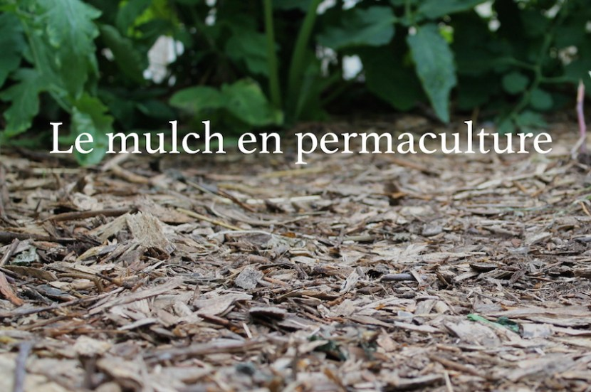 mulch en permaculture BRF