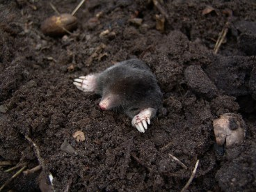 taupe le sol, la terre et les champs