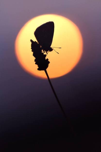papillon contre jour macrophotographie
