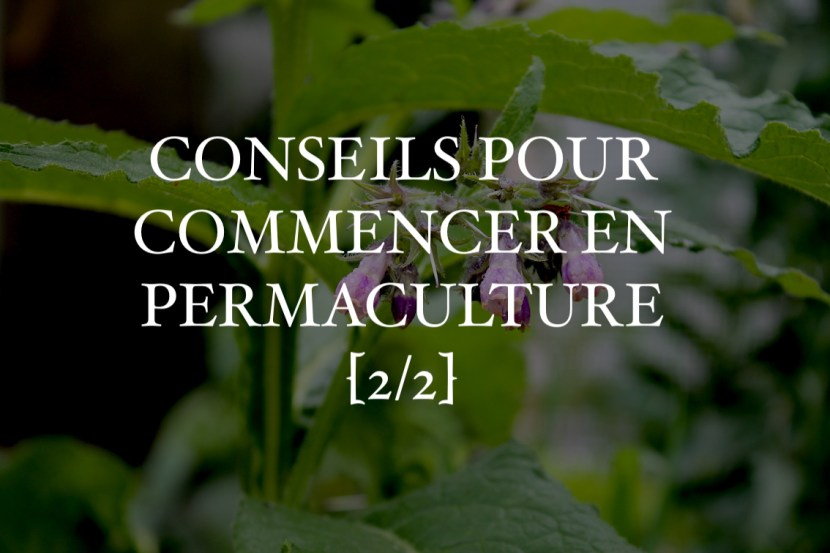 conseils commencer permaculture