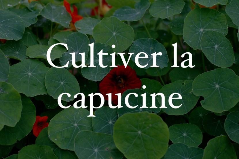 culture capucine