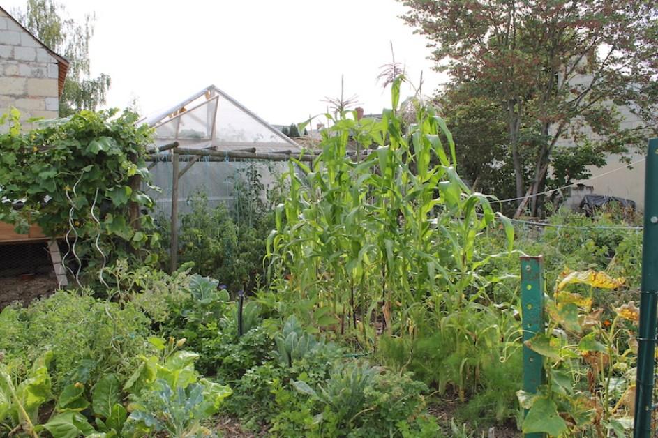 Structure pour faire pousser les tomates
