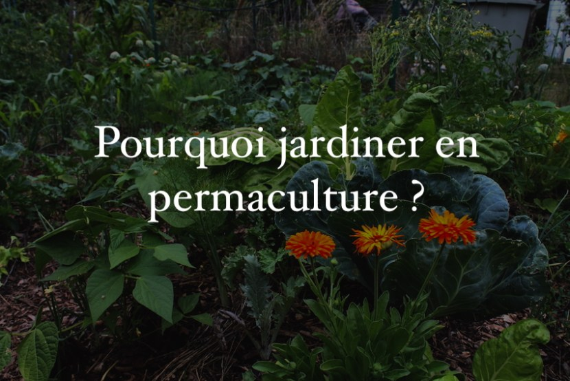Pourquoi jardiner en permaculture