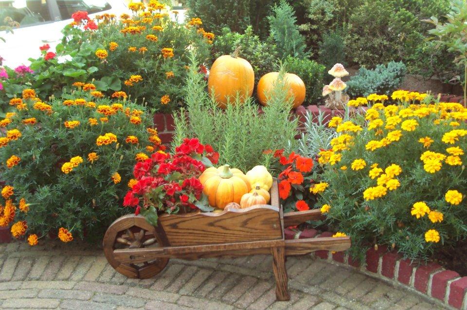 Tu jardín tu vida