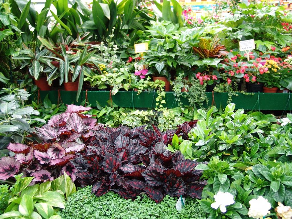 Mas plantas de interior en nuestro Garden