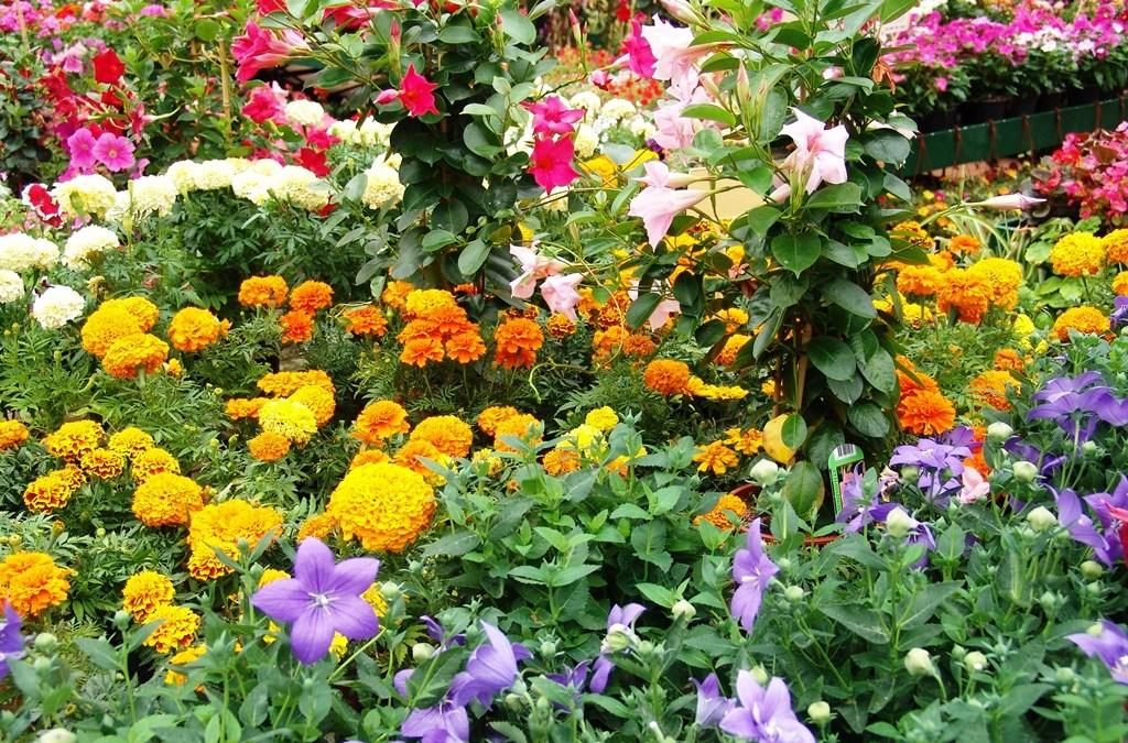Nuestras plantas de temporada