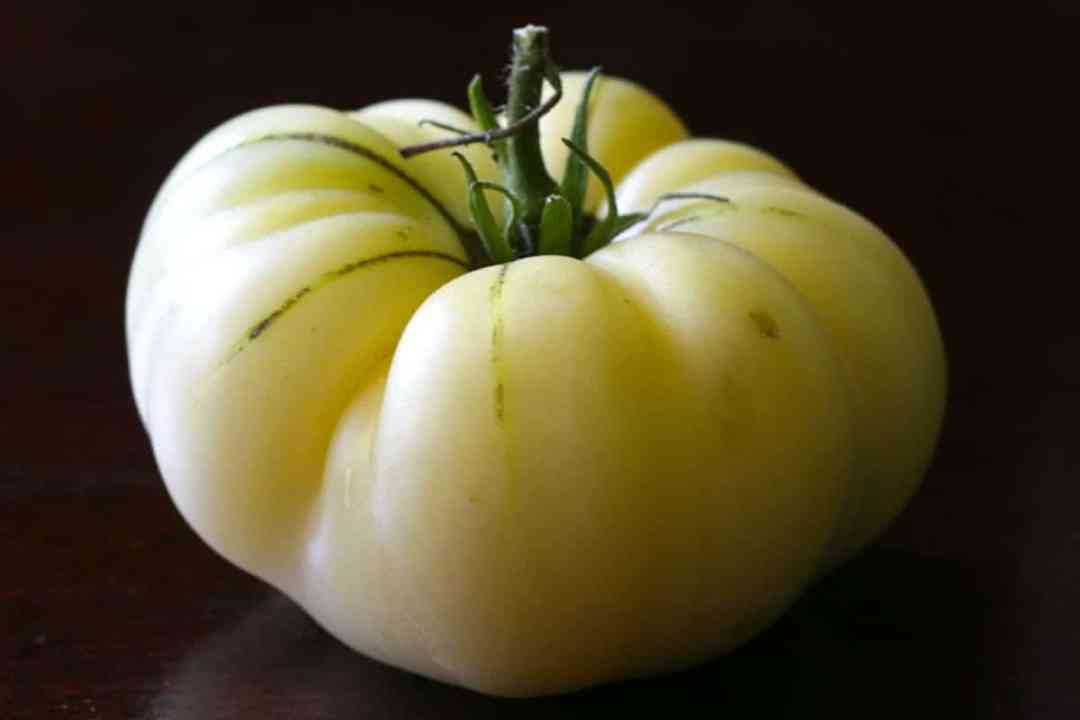 Tomato 'White Beauty', a variety of light colored tomatoes