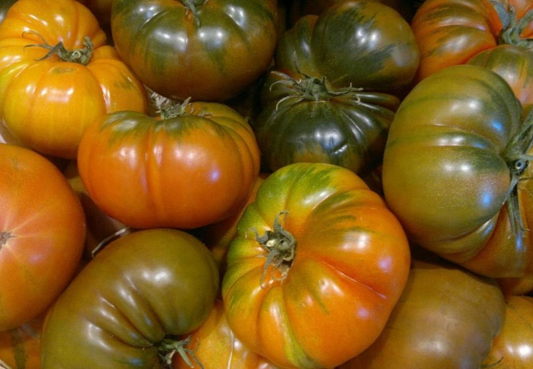 Raf tomato is widely used in salads