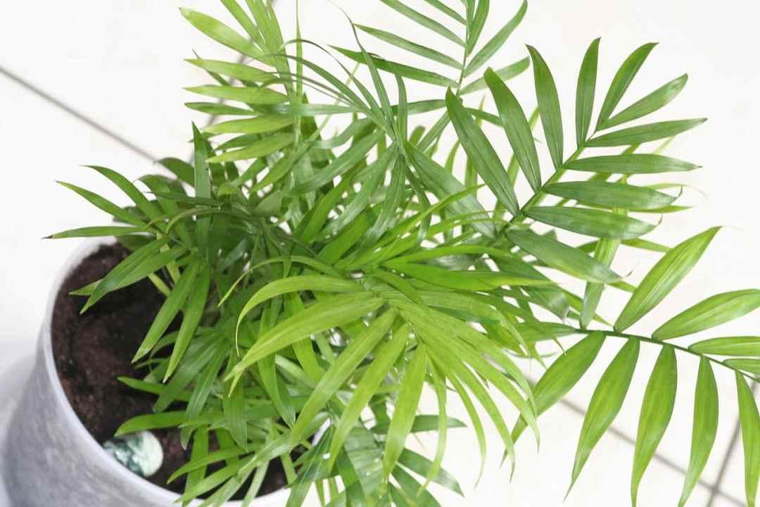 Palm trees grow fast