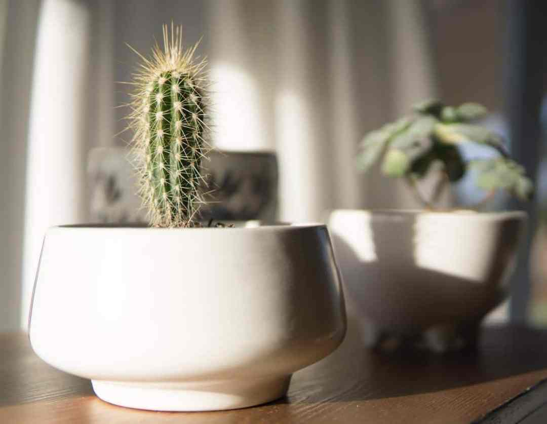 Pots without holes are not recommended for most plants