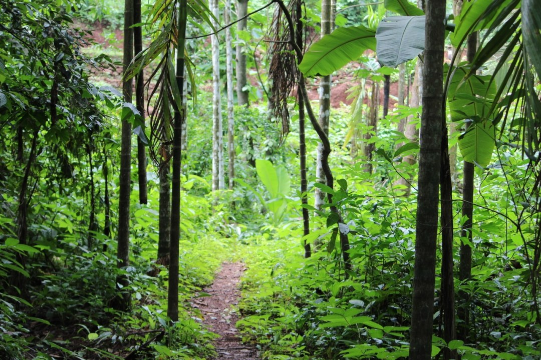 The rain forest is abuzz with plant life