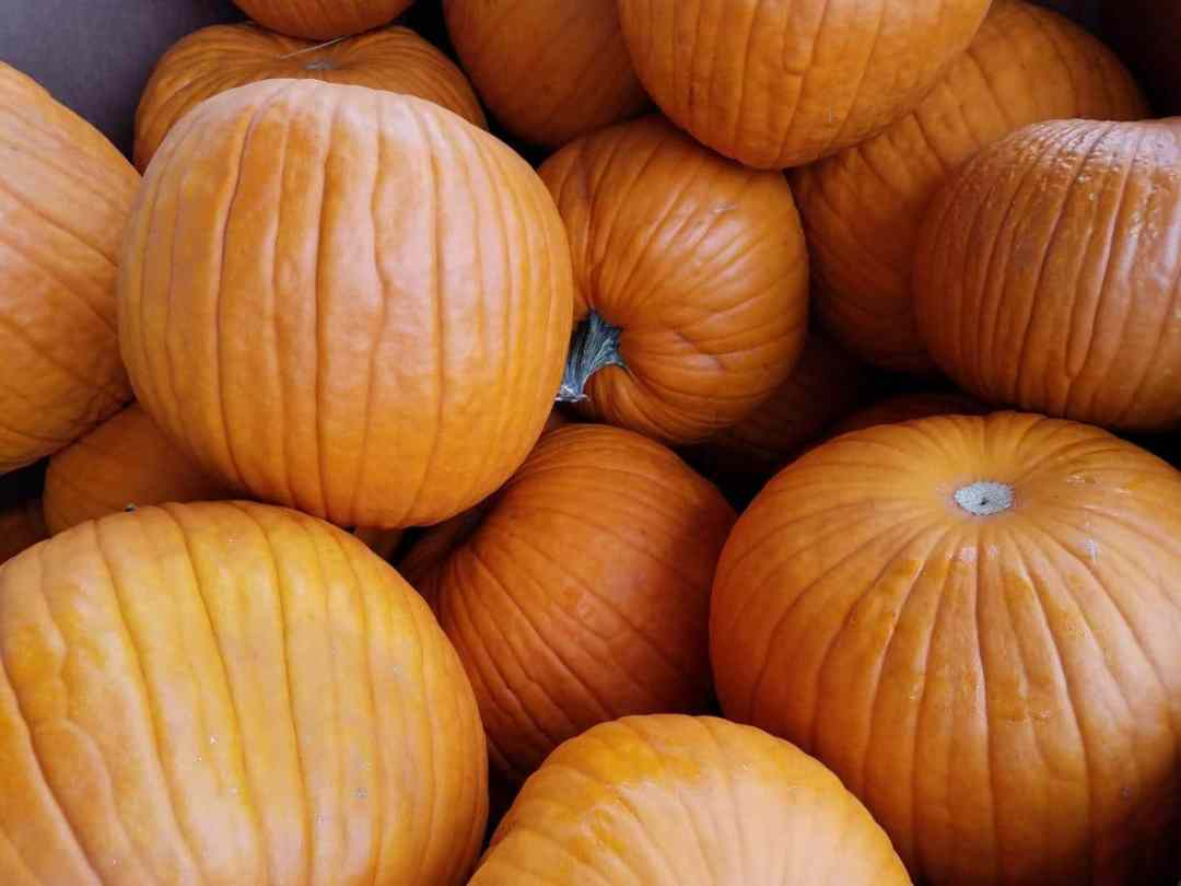 The pumpkin is a large drupe