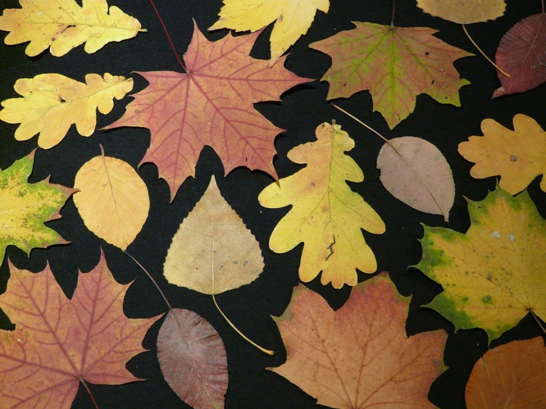 There are different types of herbaria