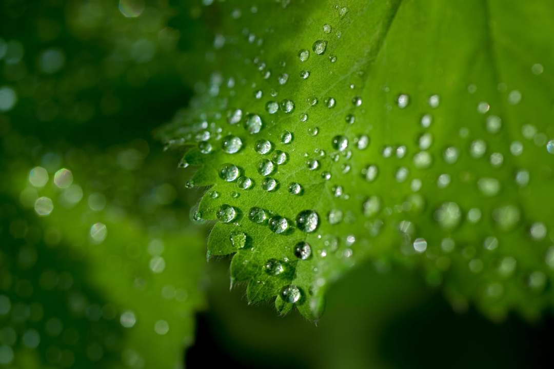 Plants feed through photosynthesis
