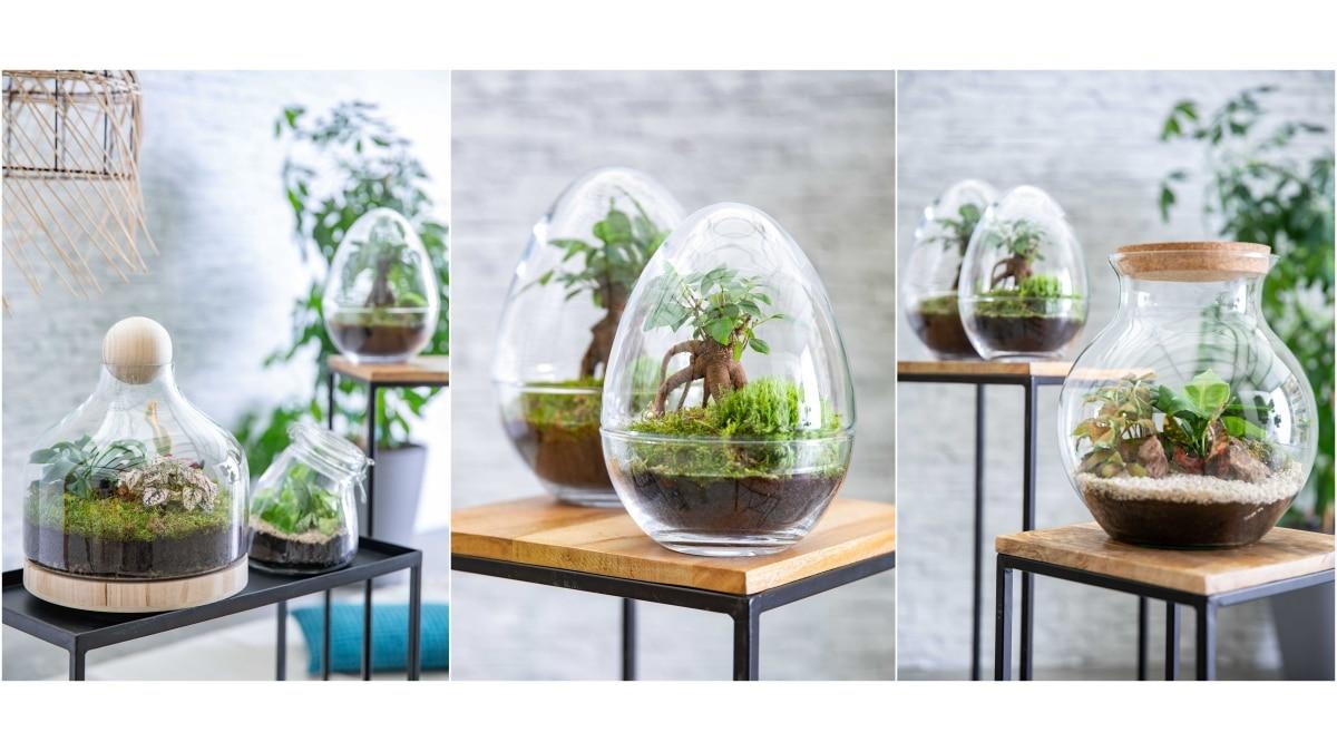 la folie des plantes vertes