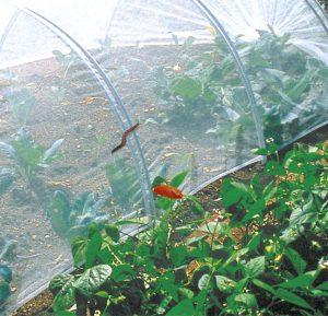 filet biocontrol jardinerie du theos
