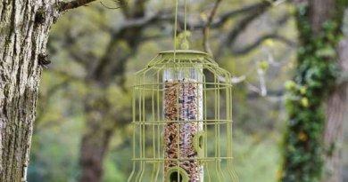 Mangeoire anti-étourneaux ou grand oiseaux