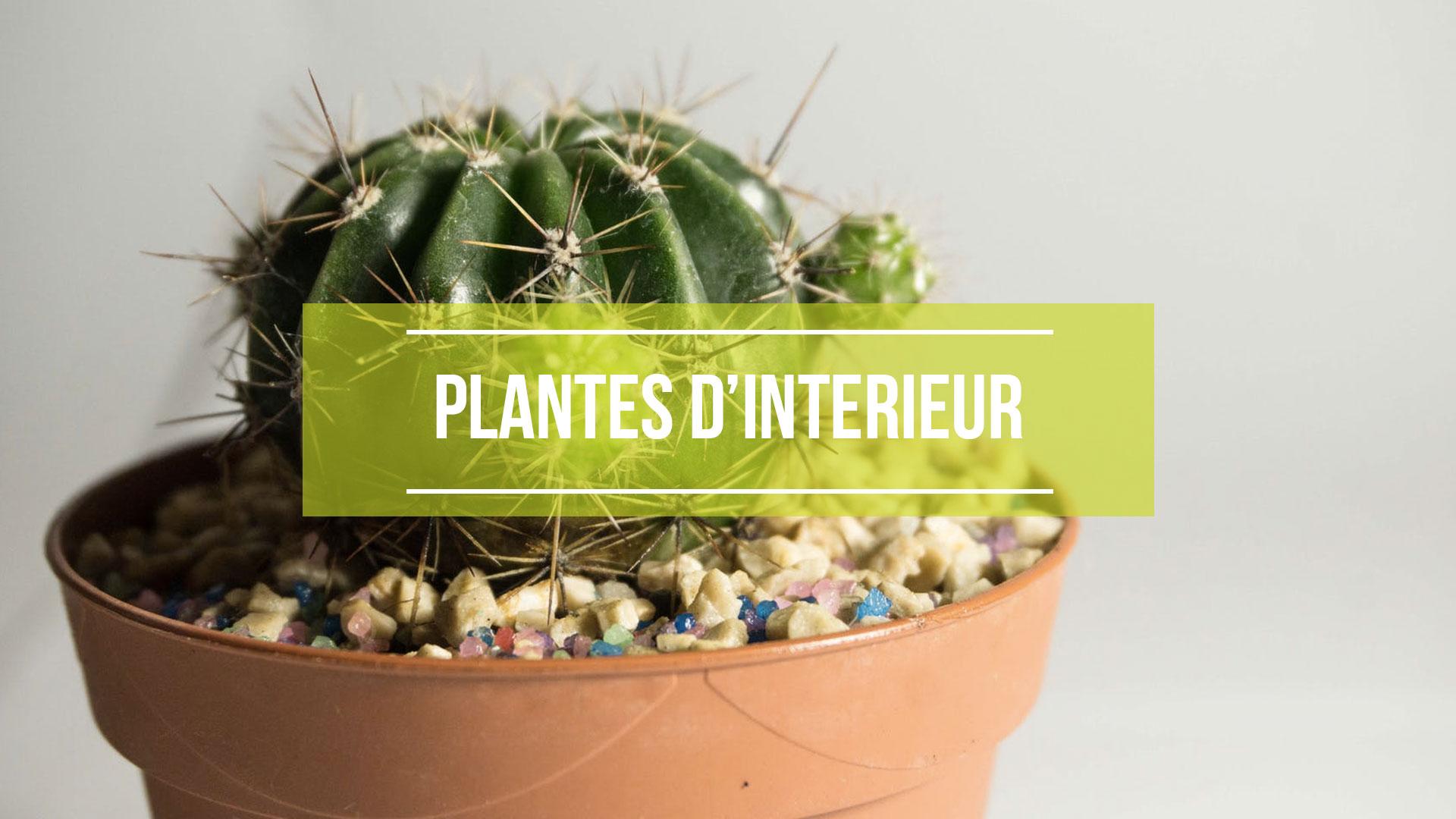 jardinerie du leman ventes de plantes