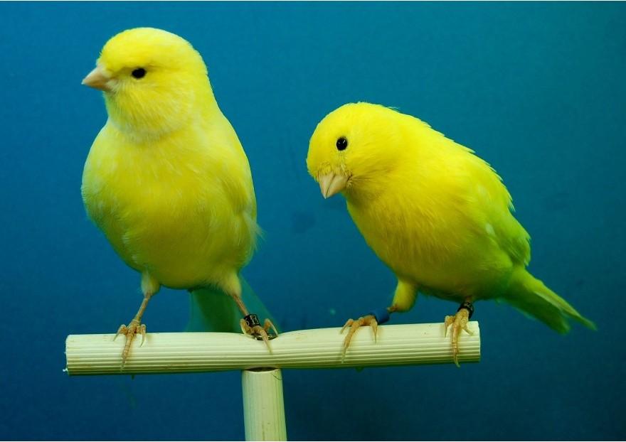 oiseaux jardinerie pasero