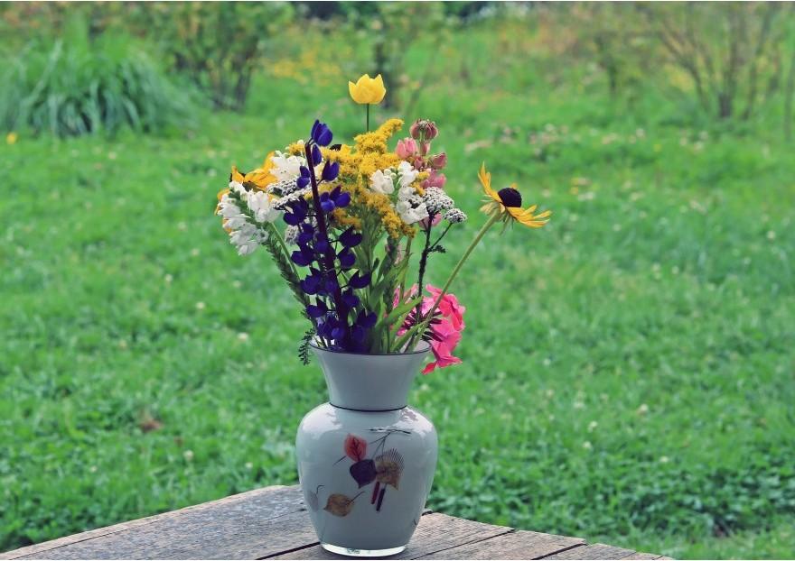 Que Faire Au Jardin En Aout Jardinerie Pasero